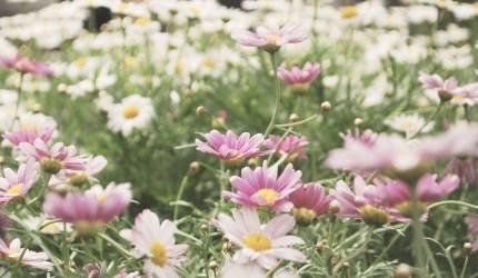 andar-per-fioriture