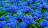 color-inspiration-blu-iris
