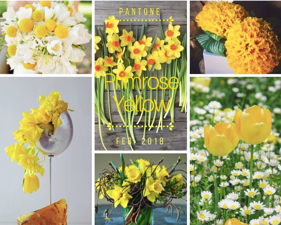 color-inspiration-primrose-yellow-fiori