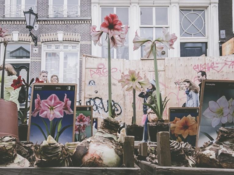 flowermarket-amsterdam