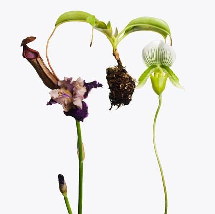 i-fiori-si-fanno-arte-Inez-and-Vinoodh-Gagosian