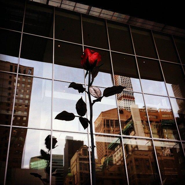i-fiori-si-fanno-arte-rose-III