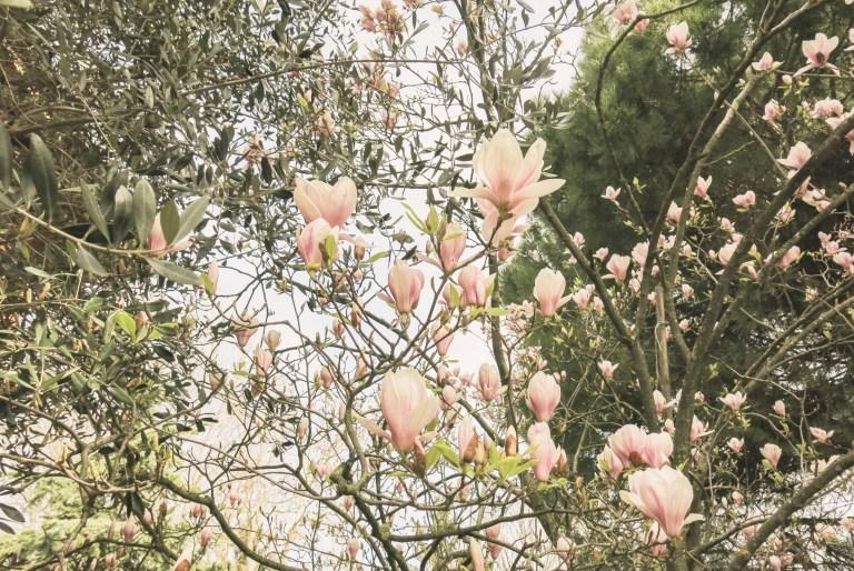 flowerista-perche-flower-blog-ramo-di-fiori