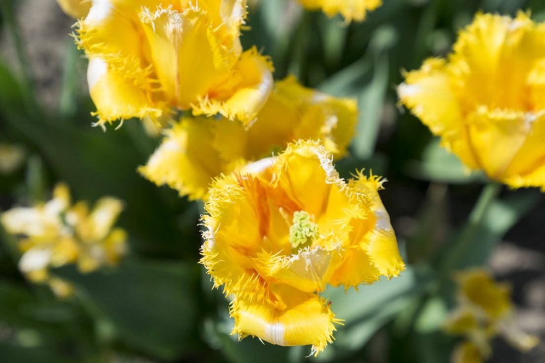 Amore-per-la-natura-Flowerista