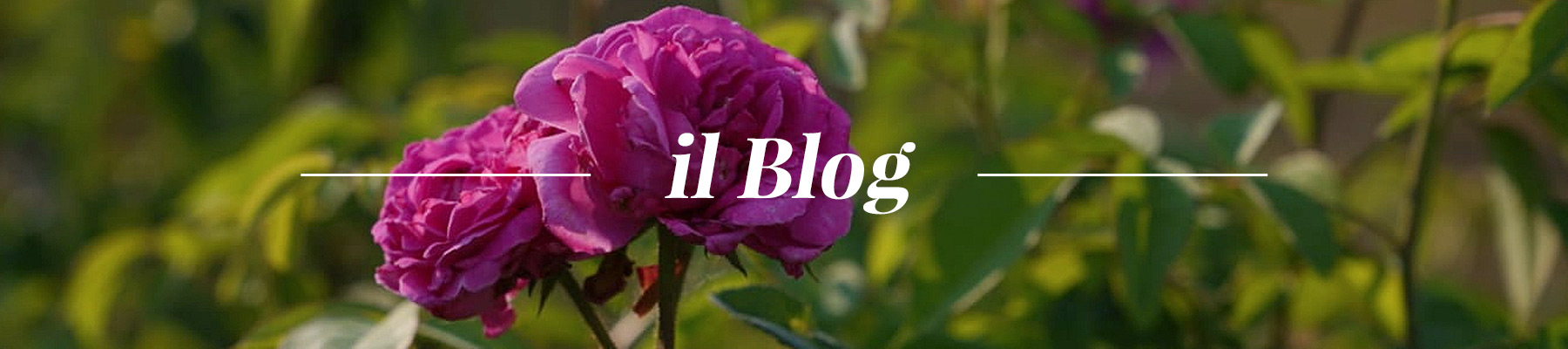 header-il-blog