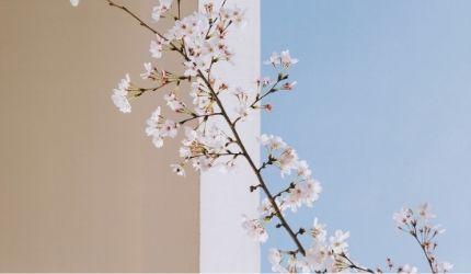 personal-branding-flowerista-thecreative-design-lab-evidenza