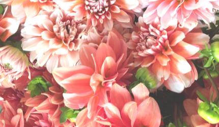 SEO Flowerista